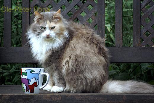 Sibirische Katze Allergie Sibirische Katze Tatjuschka